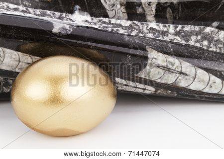 Gold Egg And Polished, Ancient Orthoceras Fossil