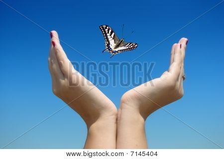 Butterfly in my hands