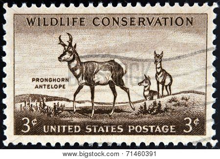 UNITED STATES OF AMERICA - CIRCA 1956: A stamp printed in USA commemorating Wildlife Conservation