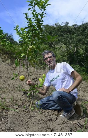 Bad harvest: Organic farmer with small orange tree