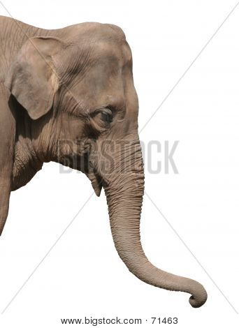 An Elephant Head Isolated