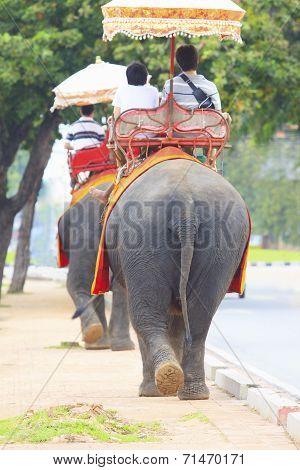 Ayuthaya Thailand-september 6 : Tourist Riding On Elephant Back walking oAyuthaya Thailand-n street