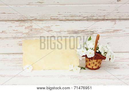 Phlox flowers in basket