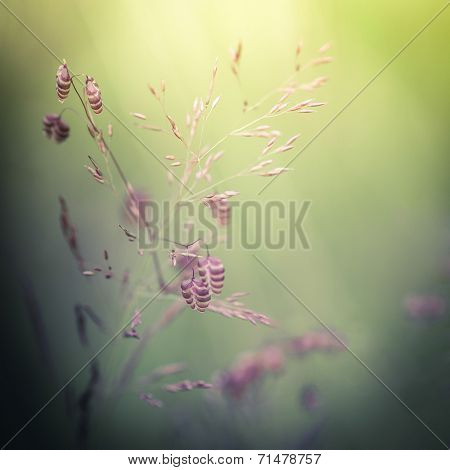 Amazing Sunrise At Summer Meadow With Wildflowers. Abstract Floral Background In Vintage Style, Wate