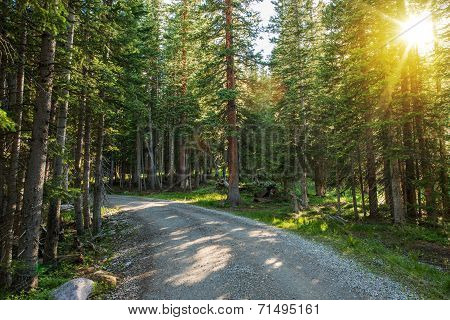 Sunny Colorado Forest Road