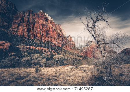 Raw Zion Landscape