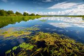 picture of day-lilies  - Pond with water lilies and grass at sunny summer day - JPG