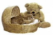 picture of cockapoo  - A tired dog is laying down in a wicker basket with a large teddy bear beside him isolated against a white background - JPG