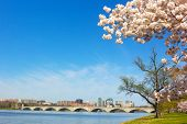 picture of rosslyn  - A View on Rosslyn skyscrapers and Arlington Memorial Bridge in spring - JPG