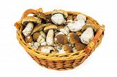 foto of porcini  - Porcini in basket penny bun in basket on white background - JPG
