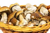 picture of porcini  - Porcini in basket penny bun in basket on white background - JPG