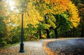 stock photo of curvy  - Curvy road covered with leaves in beautiful autumn park - JPG