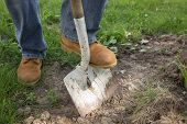 stock photo of shovel  - A workman shoveling dirt for landscape repair - JPG