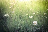 stock photo of wildflowers  - Amazing sunrise at summer meadow with wildflowers - JPG