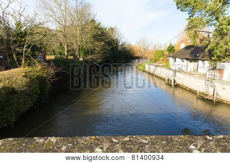 Beautiful tree River Avon Christchurch Dorset England UK