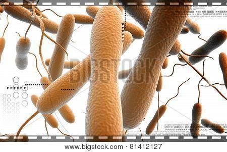 Cholera bacteria