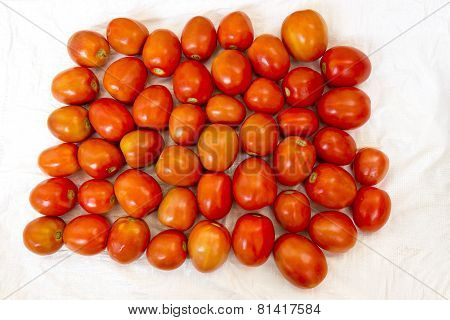 Freshly plucked almost ripe tomatoes kept in open