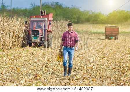 Farmer On Corn Harvest