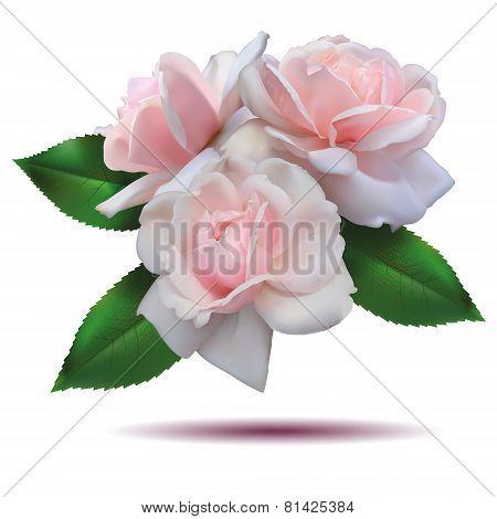 roses set