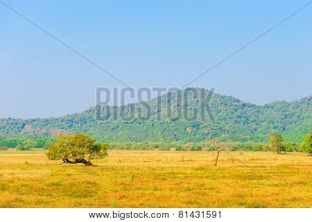 Steppe At The Foot Of The Hill With Yellow Grass