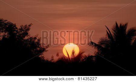 Silhouette Sunrise A Little Birds