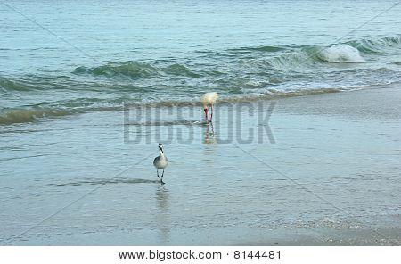 Birds At The Shore