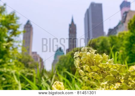 Central Park flowers Manhattan New York US