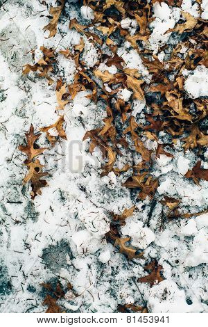 leaves on the wet snow
