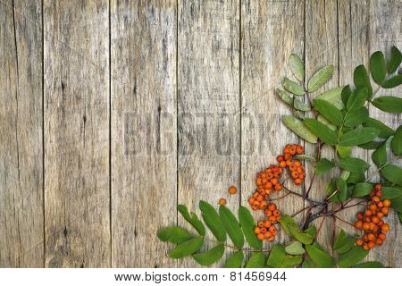Retro style frame with mountain ash berries (Sorbus aucuparia) on raw wooden background.