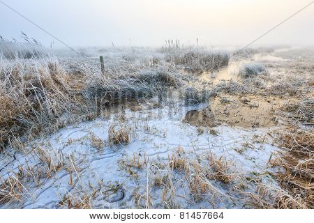 Cold Winter Landscape Of Wetlands With Mist