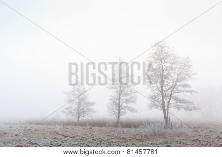 Trees In A Cold Foggy Winter Grassland Landscape
