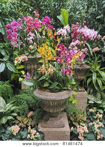 Orchid Arrangement In Stone Vases