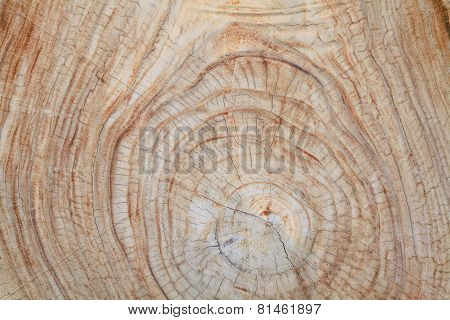Teak wood stump