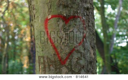 Reg heart on tree bark