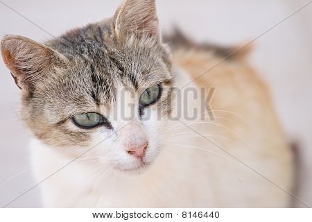 small cat close up