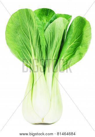 fresh green pak choi on a white background