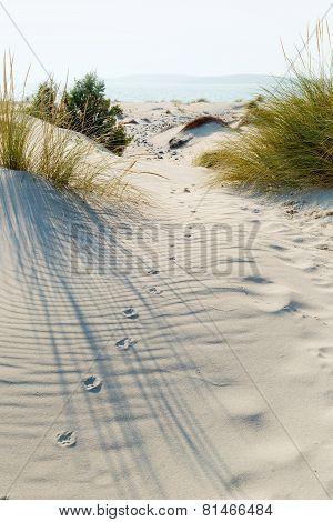 Animal tracks.