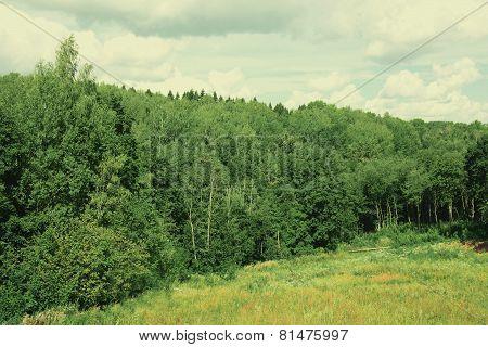 Landscape Dense Forest