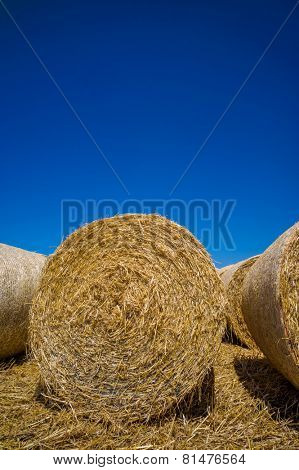 bales of corn after harvesting a wheat field