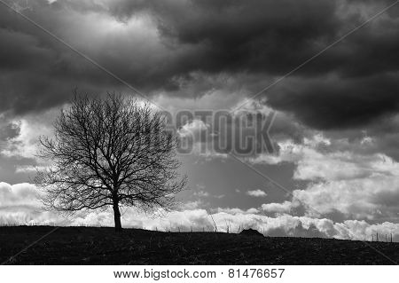 Tree In A Storm 4 Lt