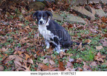 black/white dog