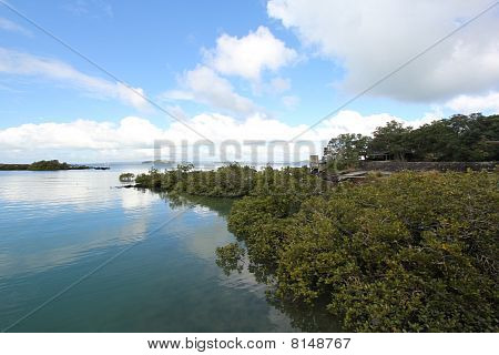 Mangrove shoreline at the island bay