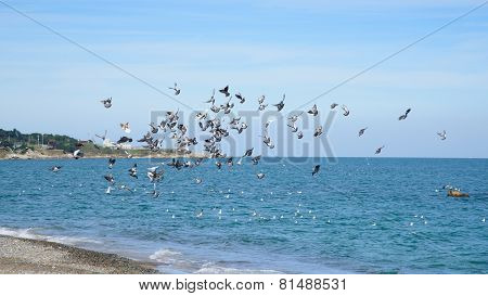 Seagulls At A Shore