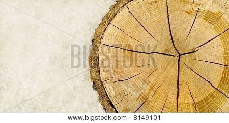Cut Log