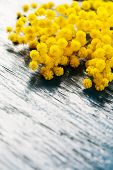 stock photo of mimosa  - Brunches of mimosa (silver wattle) on wooden background