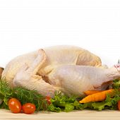 image of turkey-hen  - Fresh raw turkey in a roasting pan ready for the oven - JPG