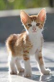 Cute red kitten poster