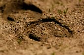 picture of footprint  - detail of the horseshoe footprint in the sand
