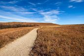 stock photo of tallgrass  - Konza Prairie is an 8600 - JPG