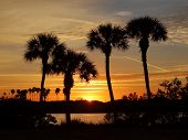picture of florida-orange  - 4 Palm trees are silhouetted by the sun rising over the river in this tropical Florida scene - JPG